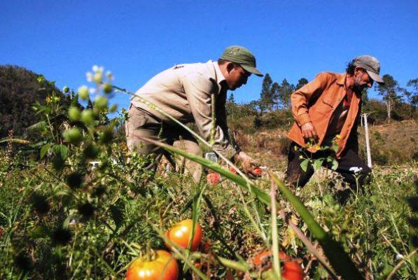 Cuba_agricultura.jpg