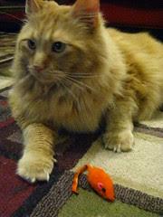 Jasper and the orange mouse