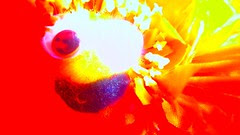 blurry secret thing