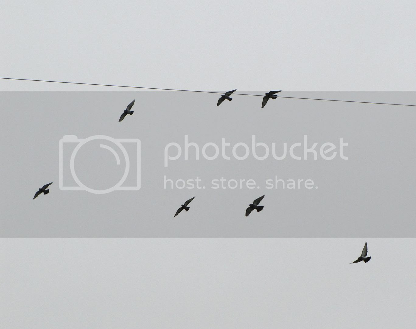 photo 56ad3d68-2ed5-461c-a493-1d7ba16a651d.jpg