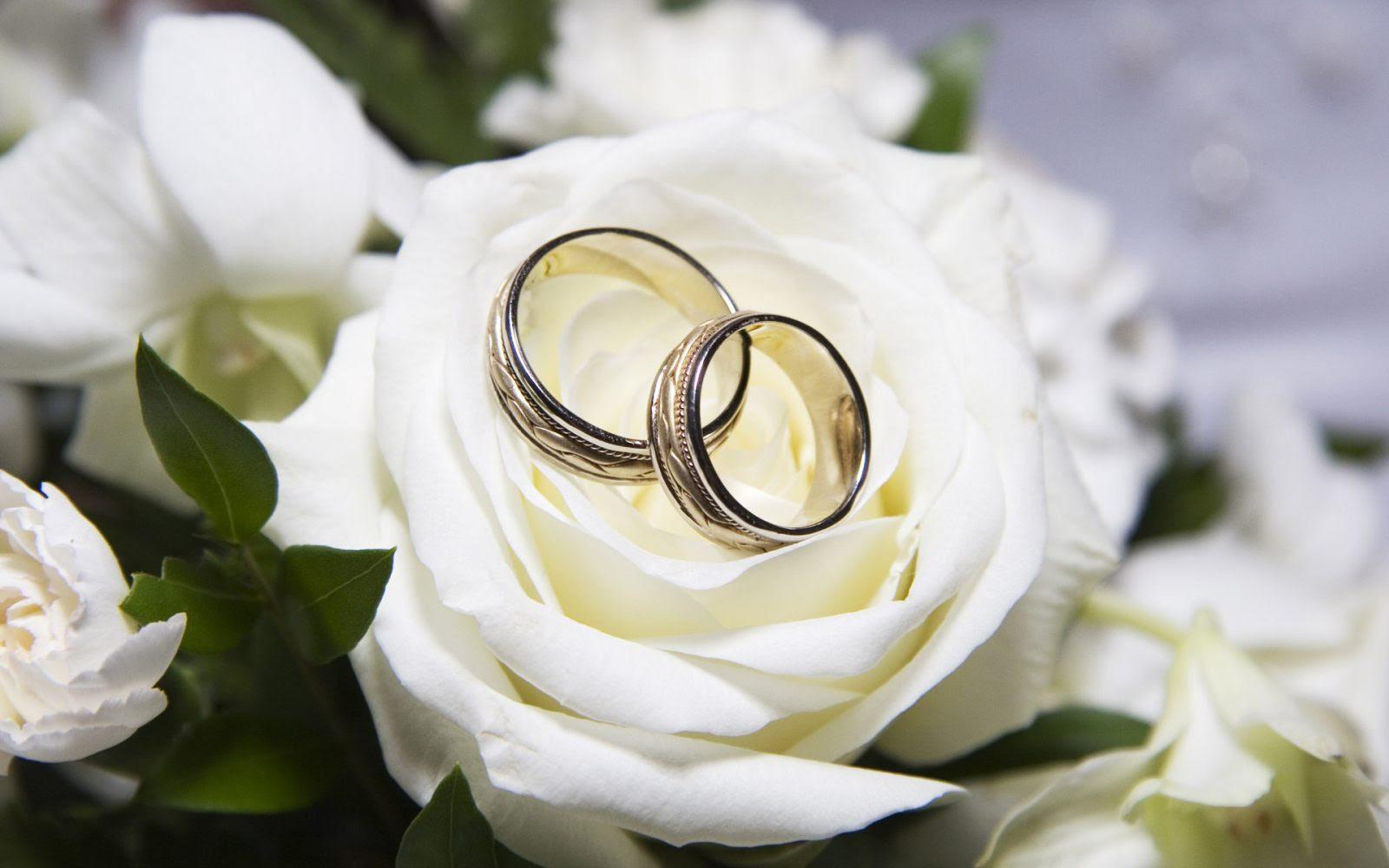 Rosas Blancas Para Alianzas Imágenes Y Fotos