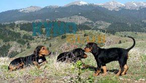 Πρέβεζα: Κυνηγόσκυλα έπεσαν σε γκρεμό βάθους 60 μ. επιχείρησαν Π.Υ. και ΕΜΑΚ - Φώτο
