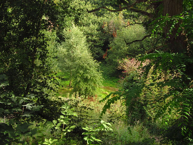 Glade near the Vale of Health