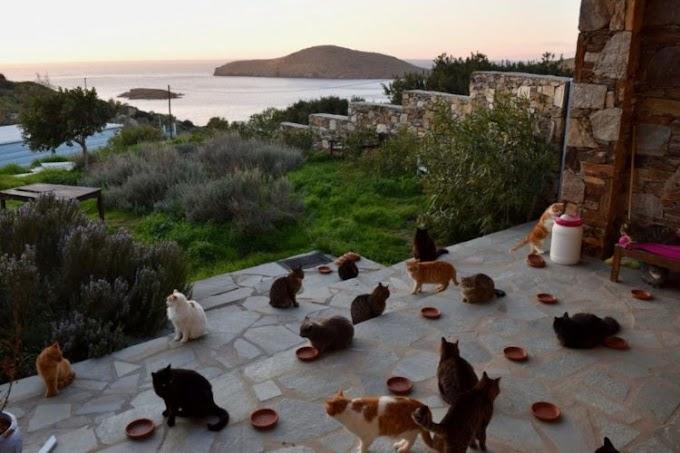 Una oferta de trabajo en una paradisíaca isla griega llena de gatos está enloqueciendo en la red