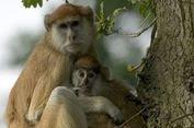 Kebakaran di Taman Safari Inggris, 13 Ekor Monyet Mati