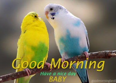 Bird Good Morning Images Quotes Wishes Messages Greetings Ecards