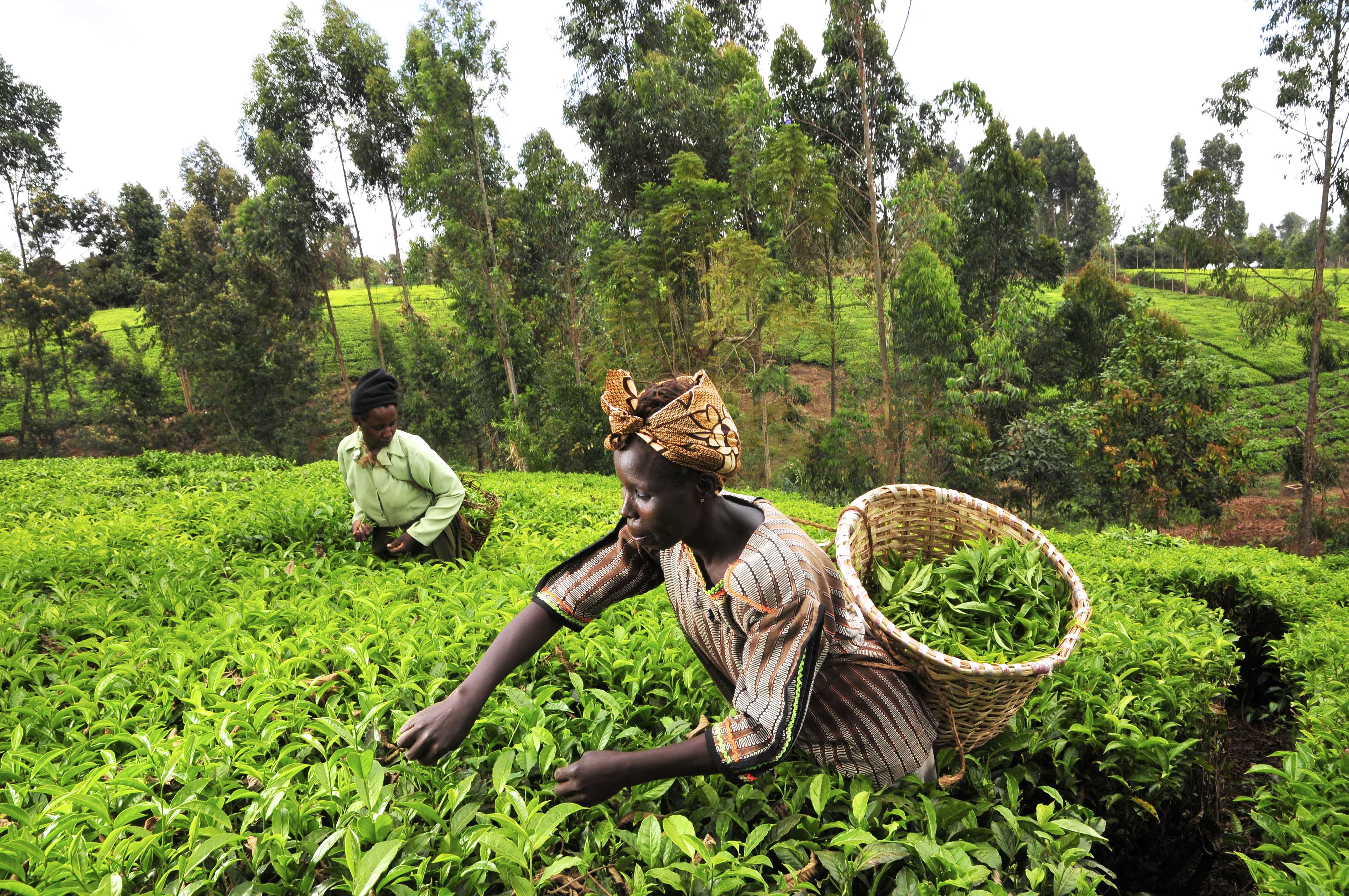 development and changes in agriculture in the world today