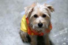 Max's Raincoat