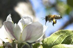 Mesinikud nõuavad pestitsiidide kasutamise piiramist