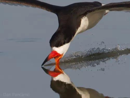 اغرب اشكال مناقير الطيور في العالم بالصور