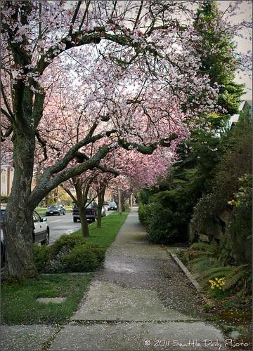 Spring Streetscape