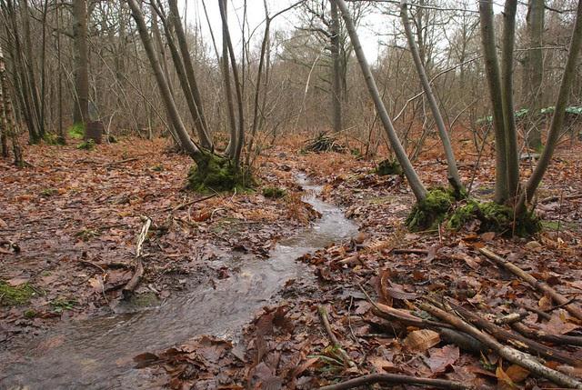 DSC_5449 Wet woodland
