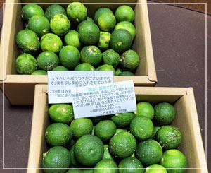 徳島県のふるさと納税返礼品、すだち!