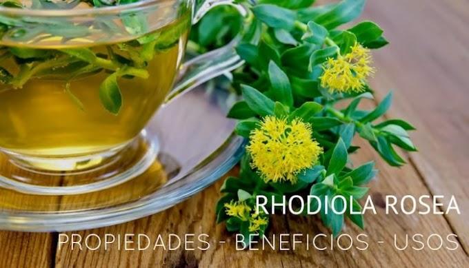 PROPIEDADES, BENEFICIOS Y USOS DE RHODIOLA ROSEA