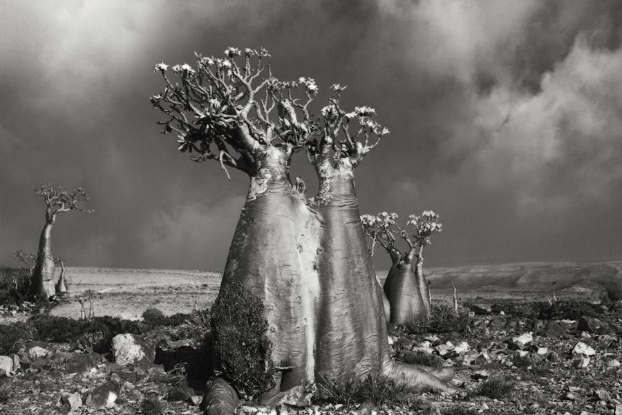 Desert Rose (Wadi Fa Lang) copy