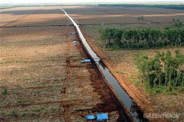 https://p3-admin.greenpeace.org/espana/Global/espana/image/bosques/deforestacion.jpg