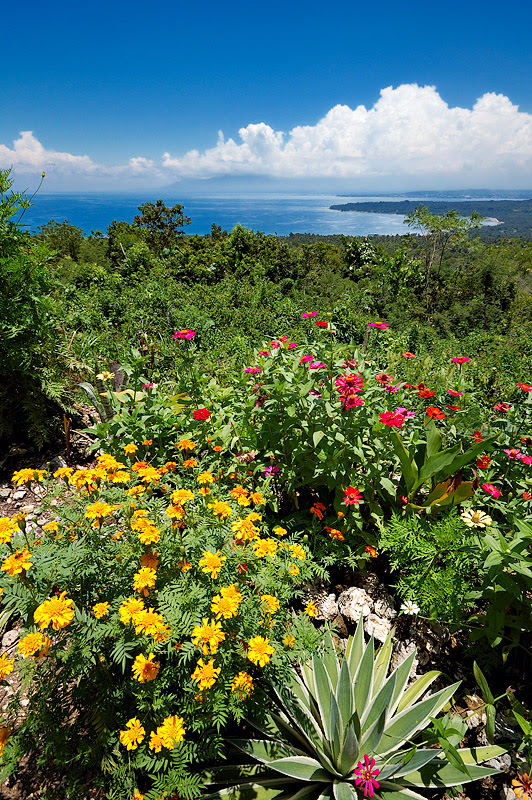Licup Viewpoint Flowers