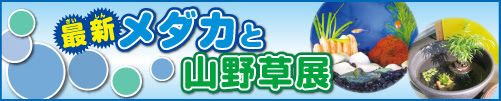 20170327mdk_ban2.jpg