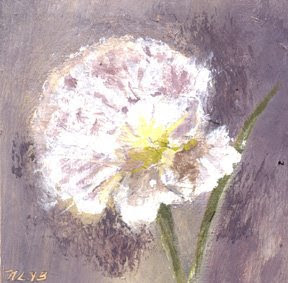 one hour carnation