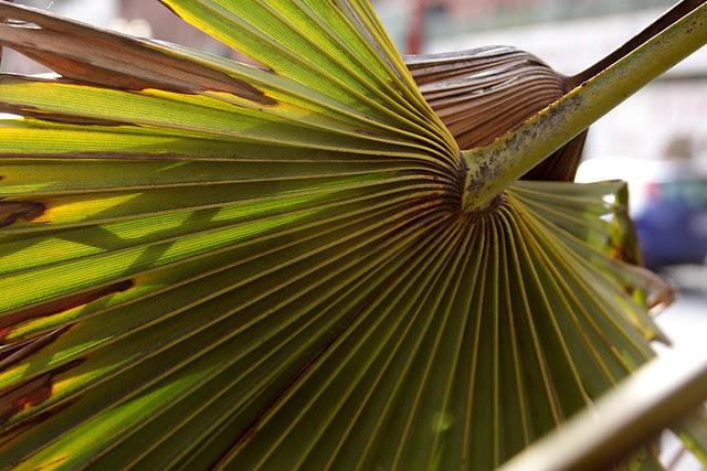 palm, fourth avenue