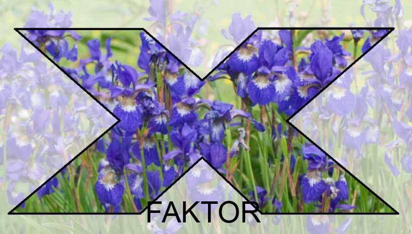 blaa-blomster-x