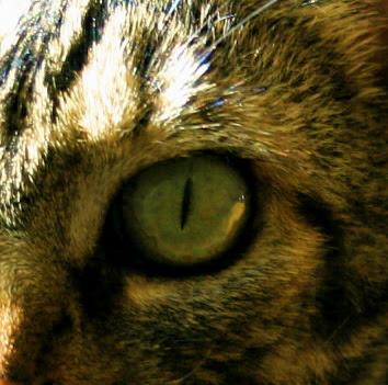 Calvin's Eye