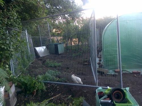 Goat paddock temporary Sept 13