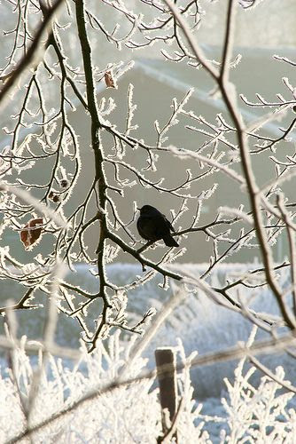 beautiful photo of winter