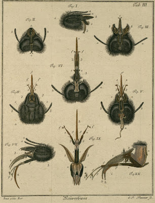 book illustration of insects