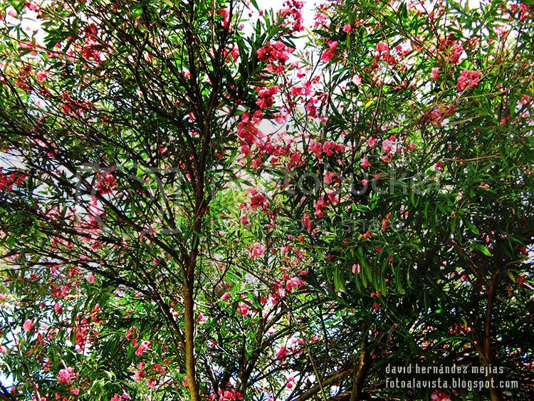 Fotografía de árboles con flores tomada en Croacia