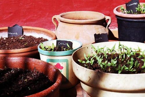Αρωματικά φυτά από τη γλάστρα στο πιάτο σας