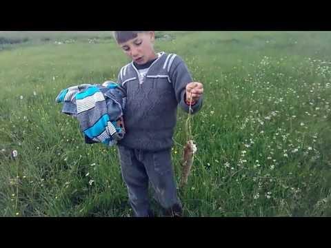 Ardahan akarsularında balıkçılık akarsu dere balık videosu