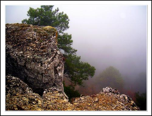 mañana de niebla en río lobos 2