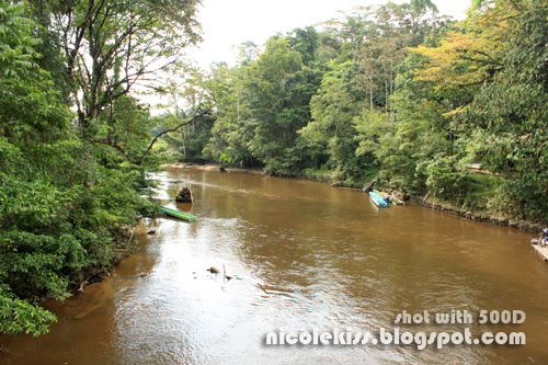 river in national park mulu