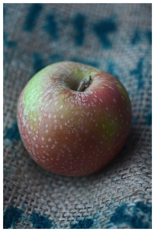 apple© by Haalo
