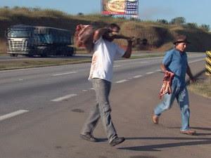 Animais são saqueados após acidente na Rodovia Fernão Dias, em Três Corações (Foto: Reprodução EPTV / Erlei Peixoto)