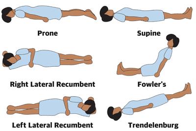 Superior Definition Anatomy - Anatomy Drawing Diagram