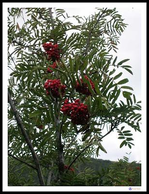 frutas montaña