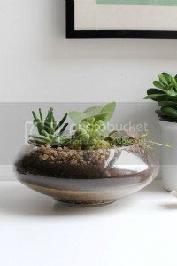 diy terrarium, craft, uk, blogger