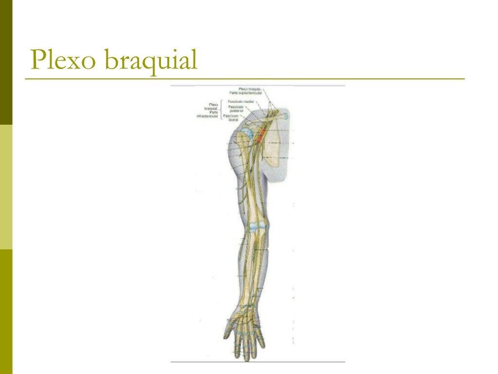 Partes do plexo Supraclavicular Infraclavicular