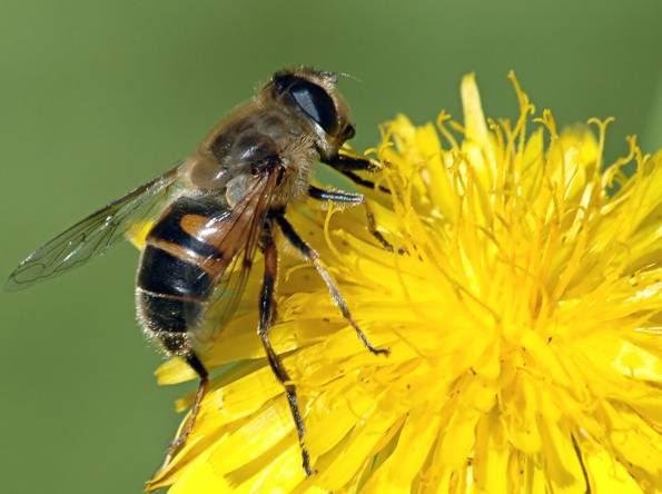 abejas-_595_444_3381