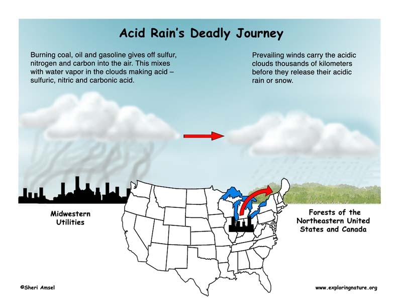 Acid Rain Webquest Worksheet Answer Key - Promotiontablecovers