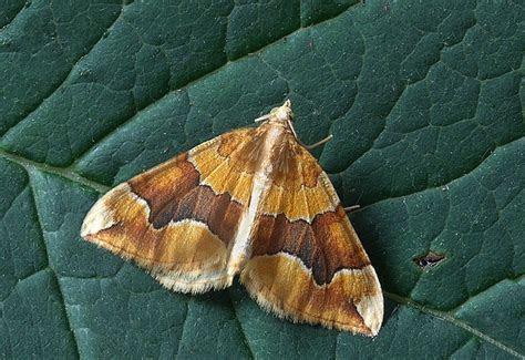 How To Eliminate Moths Fast   Pest Exterminators London