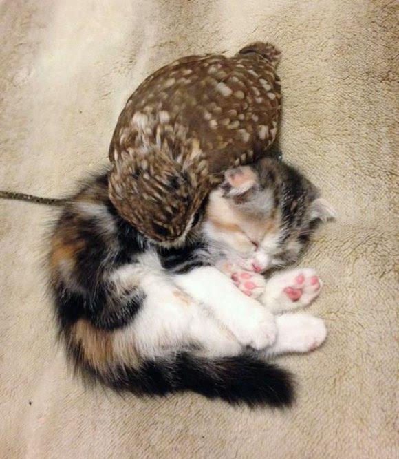 coruja e gato 5