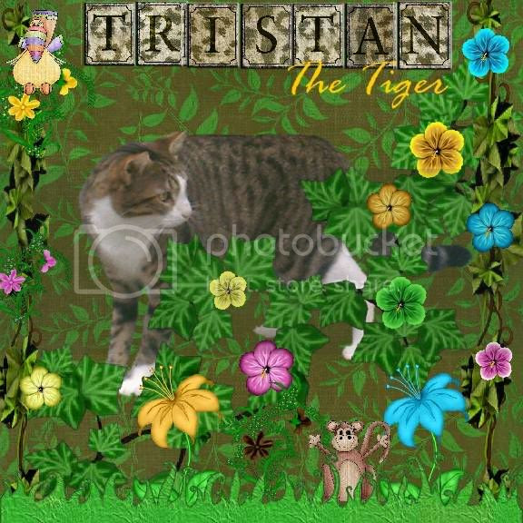 Tabby Cat,Sir Tristan,Domestic Cat,Jungle Love