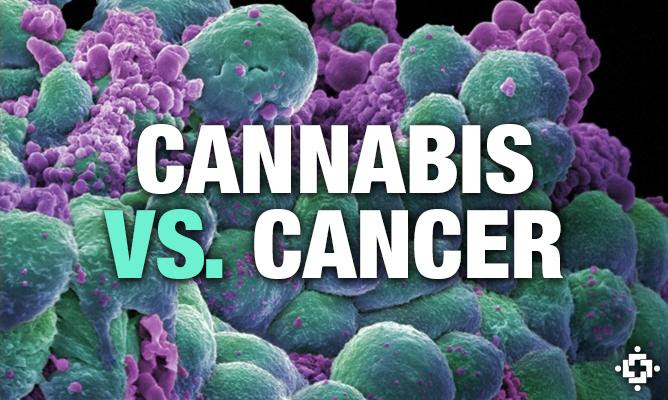 Image result for 20 MEDICAL STUDIES THAT PROVE CANNABIS CAN CURE CANCER!