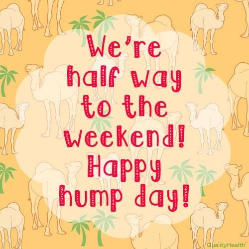 Exclusive Hump Day Pictures And Quotes