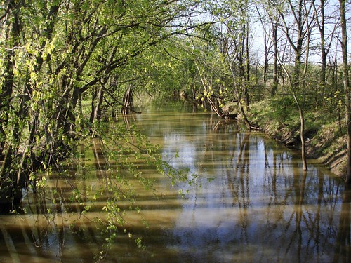 Picture of a shady creek