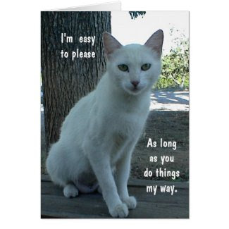 Humorous Card, white cat, blank inside Greeting Card