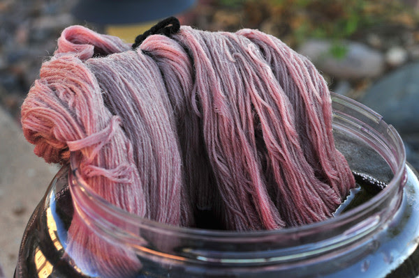 The rose petal dyepot appears to be exhausted for the wool.